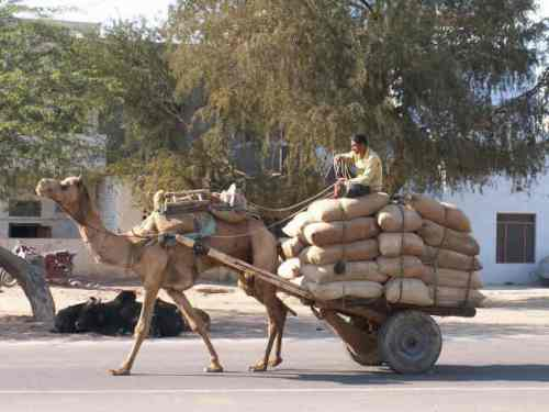 Camel cart, Sukkur, Pakistan (Photo credit:  Christie Getman-Wells)