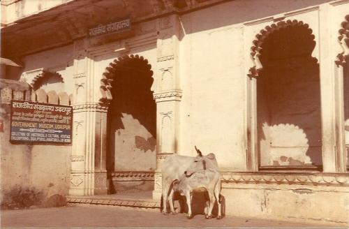 Udaipur Museum
