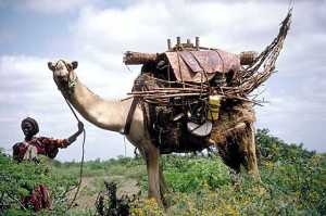 39 Woman with the family's pack camel ready for moving to a new campsite.