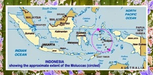 Indonesia map with Moluccas circled