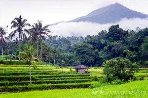 Bali, Tabanan, Jatiluwih